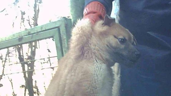 남양주시의 한 개농장 주인이 강아지의 목덜미를 잡고 이동하고 있다. 세이브코리안독스 제공