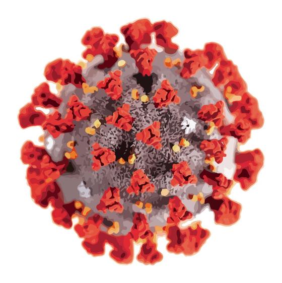 RNA바이러스인 코로나19 바이러스는 수많은 돌연변이를 일으킨다. 이 중 영국발 변이처럼 전파력이 강해 생존에 적합한 변이가 살아남는다. 중앙일보