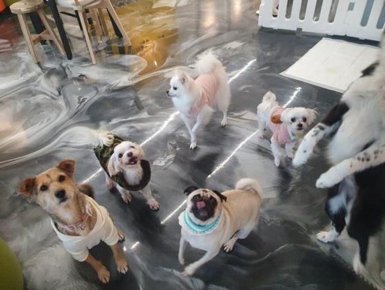 경기도 '반려동물 입양센터'에 있는 유기견들. 분홍색 옷을 입은 스피츠가 '몰리'다. 사진 경기도 반려동물 입양센터