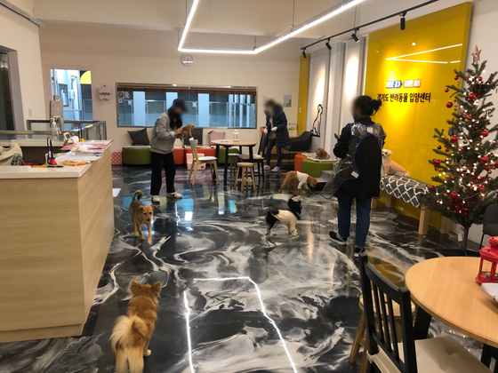 수원시 인계동 청진빌딩 2·3층에 자리잡은 경기도 '반려동물 입양센터'. 수원=채혜선 기자