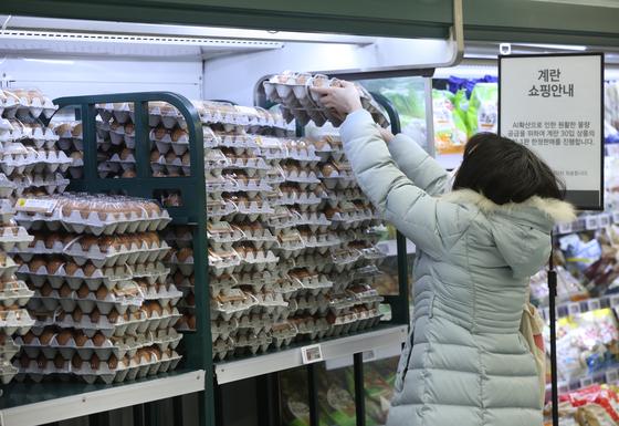 조류 인플루엔자 확산으로 산란계가 대거 살처분되면서 계란값이 치솟고 있다. [뉴스1]
