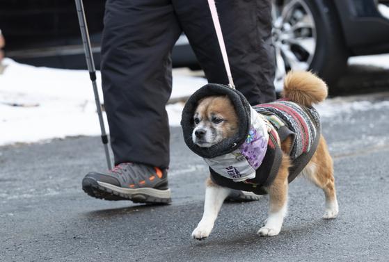 서울 등 전국 대부분 지역에 한파특보가 내려진 7일 오전 서울 홍은동에서 강아지가 털옷을 입고 주인과 산책을 하고 있다. 임현동 기자