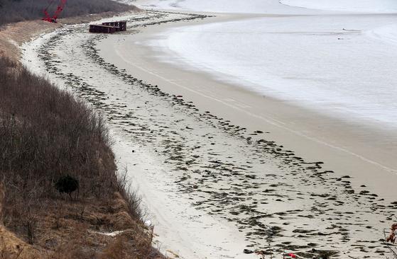 지난 21일 전남 신안군 자은도 외치해변이 괭생이모자반이 밀려들어 녹색으로 변했다. 프리랜서 장정필