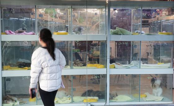 국내에서 반려동물의 신종 코로나바이러스 감염증(코로나19) 확진 사례가 처음으로 발표된 24일 오후 서울 시내 한 애완동물 판매 가게에서 시민이 강아지와 고양이를 살펴보고 있다. 연합뉴스