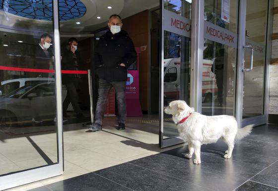 터키 트라브존의 한 병원에서 반려견 본쿡이 아픈 주인을 기다리고 있다. [AP=연합뉴스]