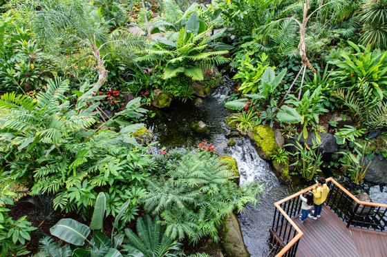 여긴 하와이 정글 속여도 통할 수목원, 한국에 있다