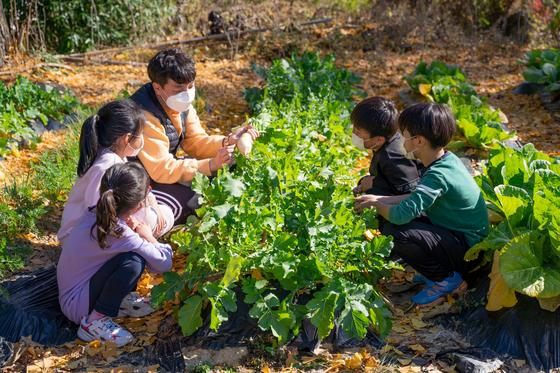 전남지역 작은 학교인 강진군 옴천초등학교 학생들이 텃밭에서 농산물 재배 체험교육을 하고 있다. 사진 전남도교육청