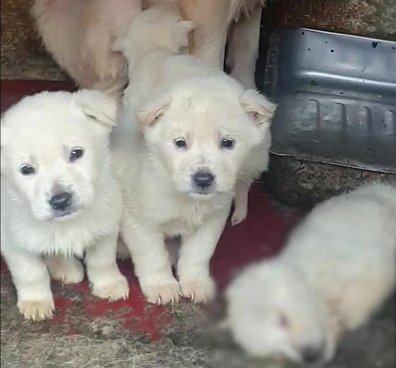 남양주 불법 개농장에서 갓 태어난 강아지들. 한 마리는 추위를 견디지 못하고 죽은 채로 방치돼 있다. 세이브코리안독스