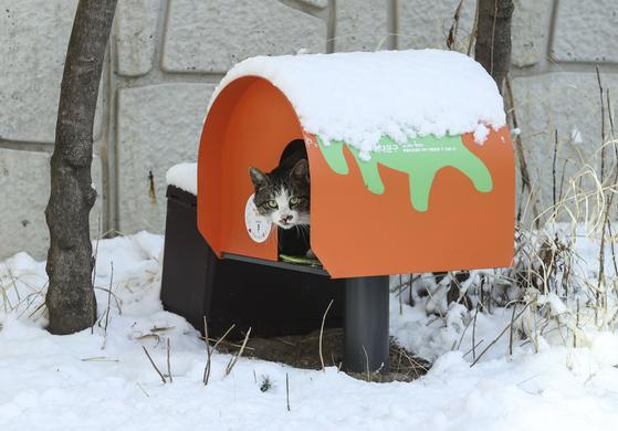 서울 서대문구의회 주차장 한 켠에 마련된 길고양이 급식소를 찾은 고양이 한 마리가 4일 사료를 먹고 급식소를 나서며 주위를 살피고 있다. 김성룡 기자