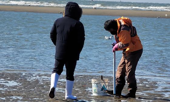 충남 서해안의 한 바닷가에서 관광객들이 일명 '빠라뽕'으로 불리는 불법도구를 이용해 개불을 채취하고 있다. 불법도구를 이용해 수산물을 채취하면 1000만원 이하 벌금이 부과된다. [사진 충남도]