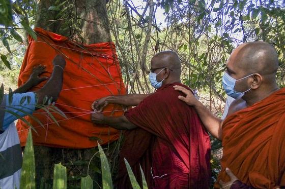 고속도로 건설을 위해 벌목 될 예정인 유일한 나무 … 스리랑카 승려들이 그 나무를 떠났습니다.