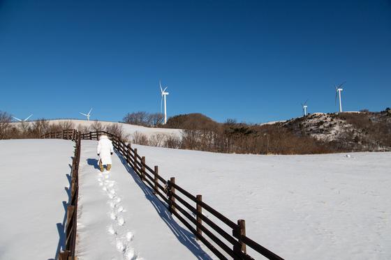 대관령은 마지막 겨울 여행지로 제격이다. 특히 해발 1000m 고지대에 자리한 목장이 겨울 진경을 만끽하기 좋다. 하얀 산, 청명한 하늘, 풍력발전기가 어우러진 풍광이 눈부시다. 지난 4일 삼양목장에서 때 묻지 않은 설경을 만났다. 최승표 기자