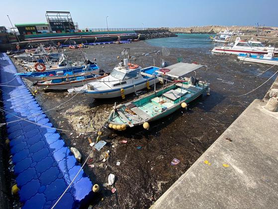 지난 20일 오후 1시 괭생이모자반이 제주시 구엄포구내 바다의 절반 이상을 뒤덮은 모습. 최충일 기자