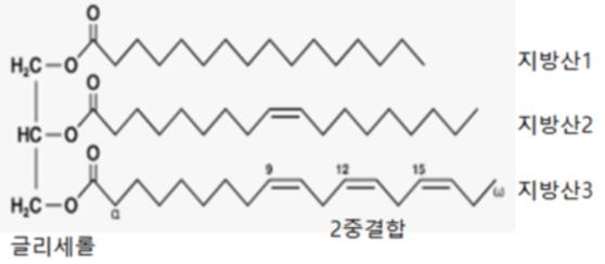 [그림1] 지방의 구조. 글리세롤 한 분자에 지방산 3분자가 결합해있는 것이 지방이다. 3분자의 지방산은 지방의 종류에 따라 다를 수도 같을 수도 있다. [자료 이태호]