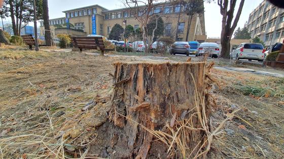 옛 충남도청사에 있던 나무가 잘려나가 밑둥만 남아있다. 프리랜서 김성태