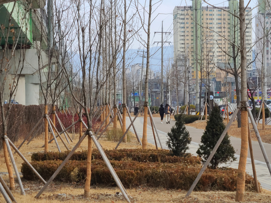 19일 강원 춘천시 퇴계동 남춘천역 인근 인도를 따라 나무가 빼곡히 심겨 있는 모습. 박진호 기자