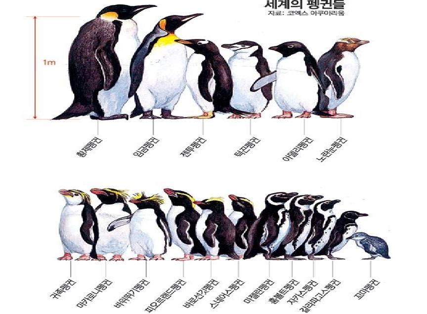 [더오래]'펭수'는 남극에만 산다?적도에도 있다