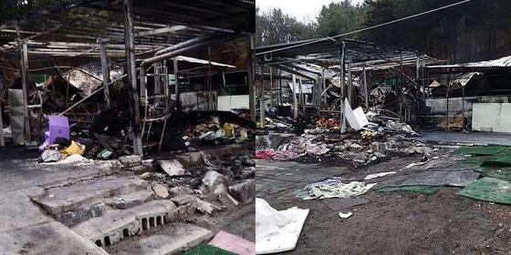 1일 배우 이용녀씨가 운영하는 경기도 포천의 유기견 보호소에 화재가 발생했다. 사진 인스타그램
