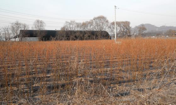LH 직원들이 사들인 경기도 시흥시 과림동 소재 농지에 작물이 매말라 있는 모습. [뉴스1]