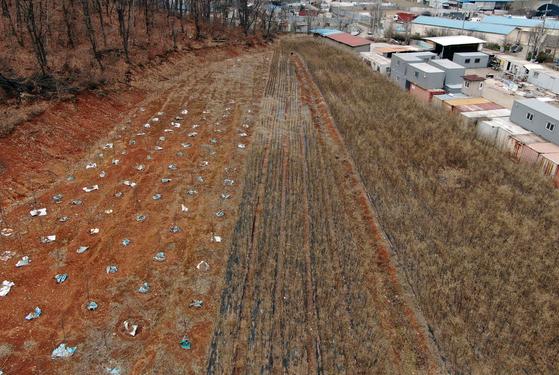 주민들에게 K사장이라 불린 LH 직원이 매입한 경기 시흥시 무지내동 땅.오른쪽 부분에 왕버들나무가 빽빽하게 심겨있다. 뉴스1