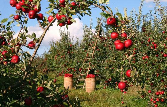 학교 텃밭 조성 사업은 농업의 중요성을 알리고 바른 인성교육을 위한 것으로 매우 효과가 크다고 한다. [사진 pixabay]