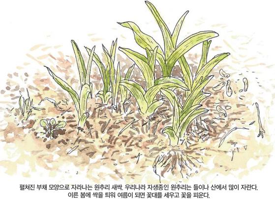 소년중앙 우리 주변 식물들의 비밀 이야기