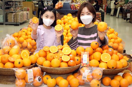 이마트는 미국산 오렌지 중 기존에 판매했던 네이블 오렌지 외에 '켄아저씨 오렌지', '카라카라 오렌지', '퓨어스펙 오렌지', 'Halo(헤일로) 만다린' 등을 17일까지 판매한다. [사진 이마트]