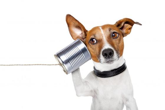 동물과의 의사소통