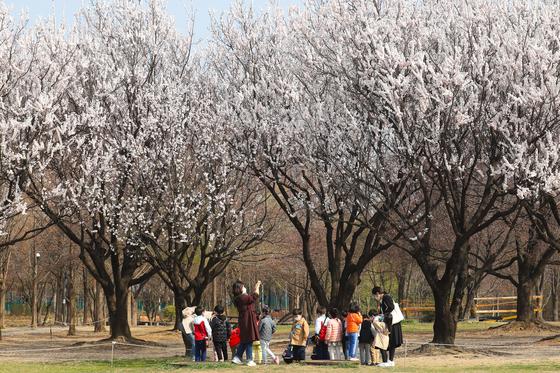 25일 서울숲에 소풍 나온 아이들의 모습. 사진에 보이는 만개한 꽃은 살구꽃이다. 최승표 기자
