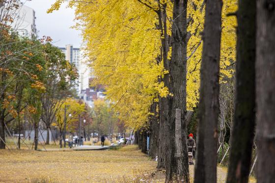 경의선 숲길 가좌역 구간은 가을이면 은행나무가 한껏 멋을 부린다. [사진 서울시, 중앙포토]