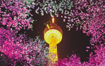 대구 달서구 이월드 내에 위치한 83타워가 환하게 불을 밝히고 있다. 이월드는 매년 봄철이면 벚꽃이 만개해 관광객들의 눈길을 사로잡는다. 순수 높이 202m의 83타워와 벚꽃이 어우러진 야경은 대구의 대표적 볼거리다. [사진 이월드]