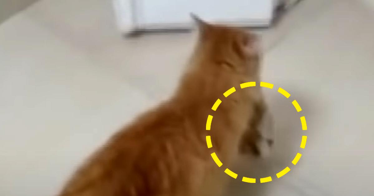 길고양이가 입에 새끼를 물고 병원 진료실로 들어가고 있다. 유튜브 캡처