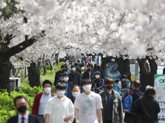 1일 오후 서울 여의도 여의서로에서 시민들이 출입이 통제된 국회 뒷길이 아닌 건너편 길을 걸으며 벚꽃 구경을 하고 있다. 뉴스1