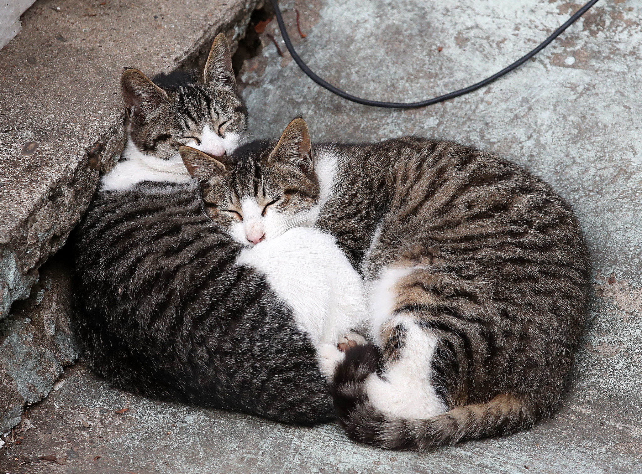 """WHO""""코로나 19, 인간 → 개, 고양이 등 동물 전파 확인"""""""
