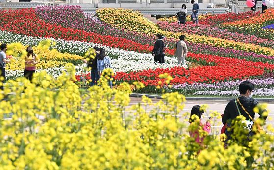 완연한 봄날씨를 보인 6일 오후 경기도 용인 에버랜드 포시즌 가든에서 시민들이 활짝 핀 유채꽃과 튤립을 감상하고 있다. 뉴시스