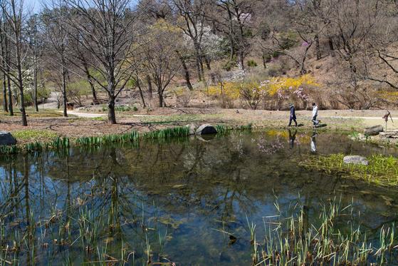 553년 역사를 자랑하는 광릉숲에 자리잡은 국립수목원은 한국 수목원의 자존심이다. 최대한 인위를 배제하며 한국 자생종만으로 이뤄진 수목원이다. 최승표 기자