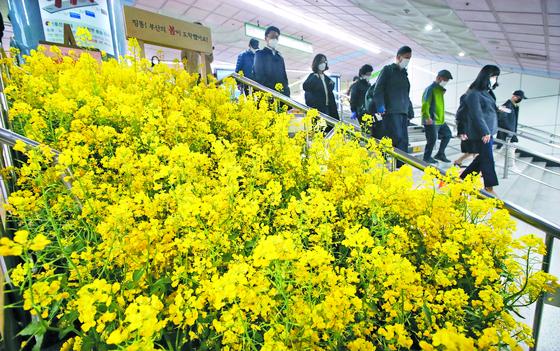 찾아가는 유채꽃 축제
