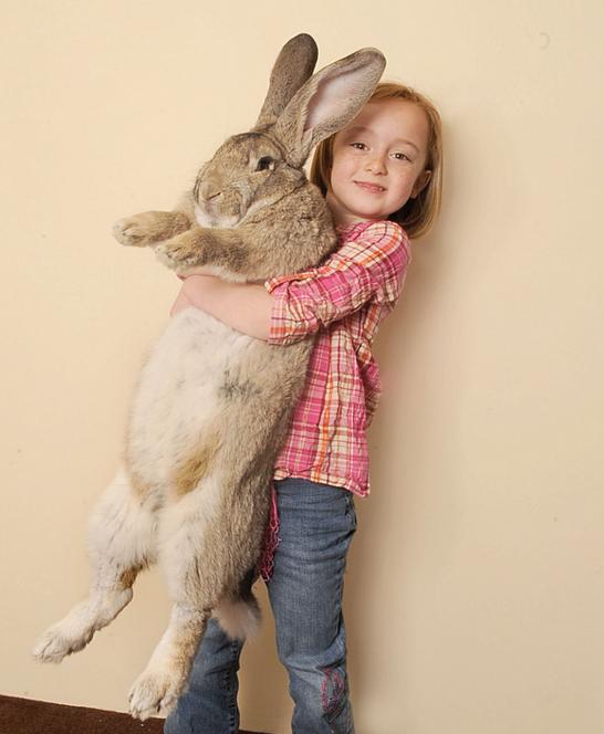 몸길이 129㎝로 기네스 기록에 이름을 올린 토끼 '다리우스'의 모습. 사진 다리우스 공식 홈페이지 캡처.