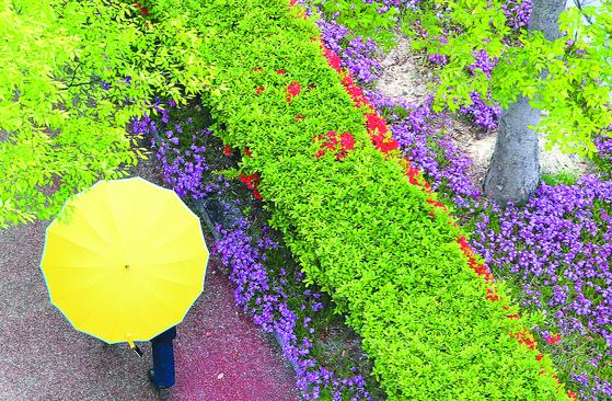 [한 컷] 봄비에 싱그러운 거리