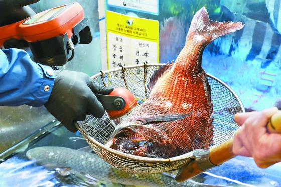 13일 노량진수산시장에서 시장 관계자가 일본산 참돔의 방사능 수치를 측정하고 있다. [뉴스1]