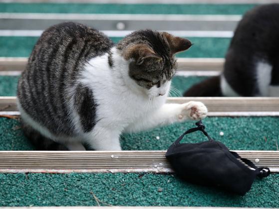 지난 1월 25일 오후 서울 시내 한 공원에서 떨어진 마스크를 가지고 장난 치는 길고양이의 모습. 사진은 기사 내용과 관련 없음. 뉴스1