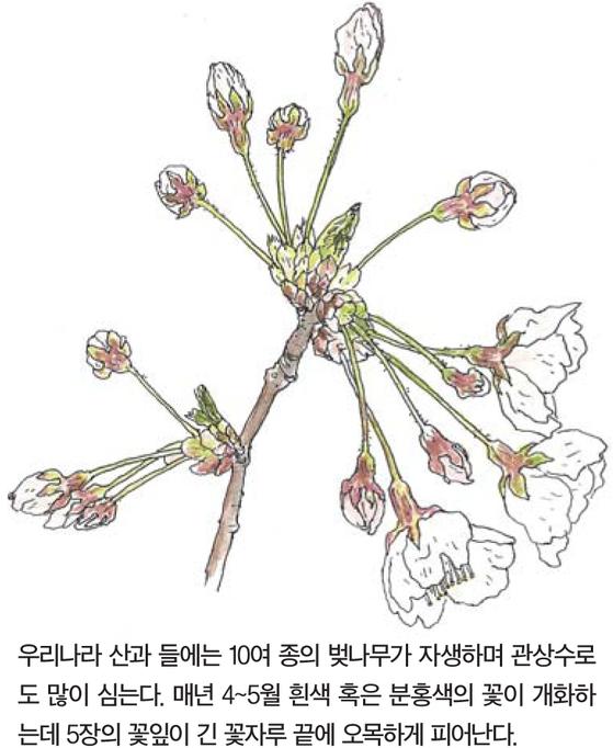 [소년중앙] 모란에게 향기가 없다는 건 사실일까