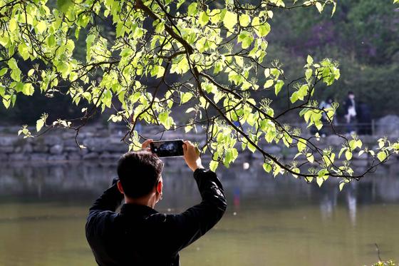 서울 창경궁 춘당지에서 한 중년 신사가 짙은 신록을 스마트폰에 담고 있다. 김상선 기자
