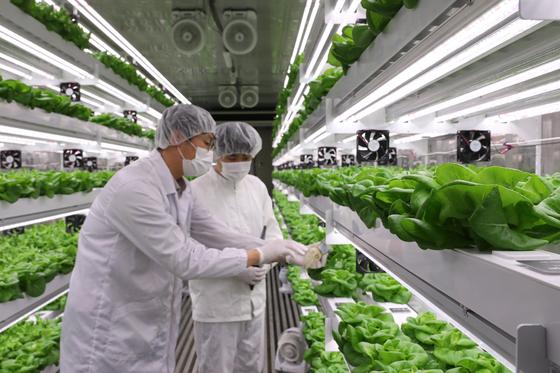 오현준 이마트 채소담당 바이어(사진 왼쪽)이 엔씽 관계자와 함께 컨테이너 내부의 수직 농장(Vertical Farming)에서 길러지고 있는 로메인을 살펴보고 있다. 사진 이마트