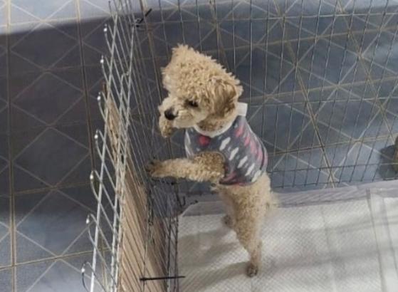 목줄에 매인 채로 공중으로 돌려진 강아지가 포항시 보호소에서 격리 조치 중인 모습. 캣치독 제공