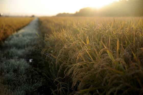 농사는 정해진 시간에 출퇴근 도장을 찍는 것이 아니어서 자율적인 시간을 만들 수 있다는 게 매력이다. [사진 pixabay]