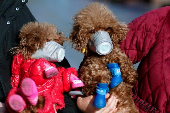 마스크를 쓴 개들. [로이터=연합뉴스]