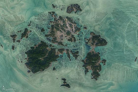 전남 완도군 노화도 주변 해조류 양식장을 촬영한 인공위성 사진. [미 항공우주국(NASA)]