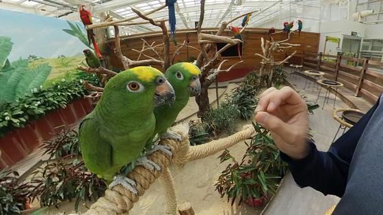 대전 오월드의 아마존 앵무새들이 사육사의 지휘에 맞춰 노래를 부르고 있다. 왕준열PD