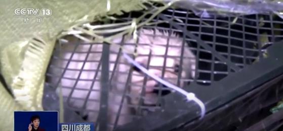 지난3일 중국 쓰촨성 청두의 한 물류창고에서 택배 상자에 담겨 발견된 강아지. [중국 관영 방송 CCTV캡처]